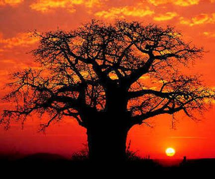 safari destination wedding in south africa