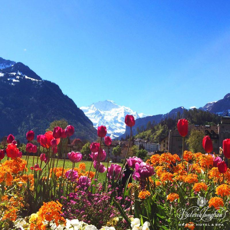 Handpicked Hotel Jungfrau